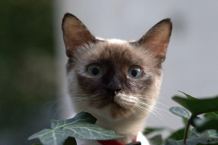 kitten peeking above a plant