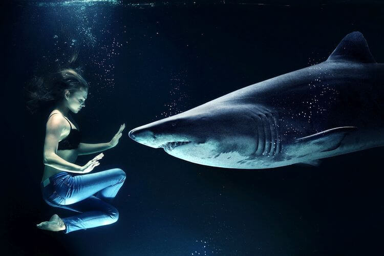 woman treading water next to large shark